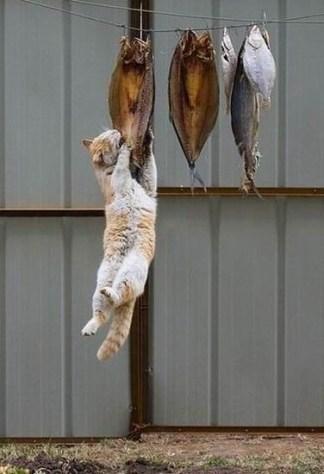 crime_cat04