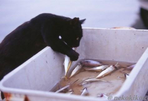 crime_cat05