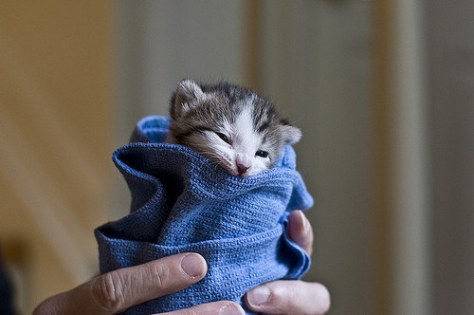 purritos_cat02