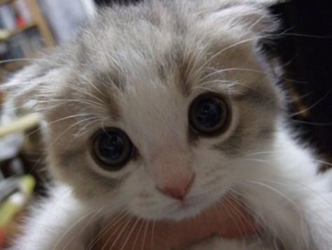 cats_eye10