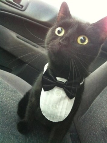 formal_cat02