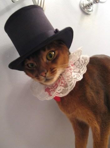 formal_cat04
