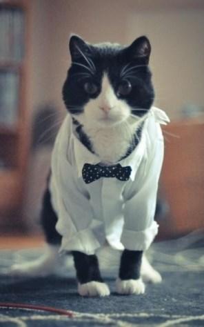 formal_cat09