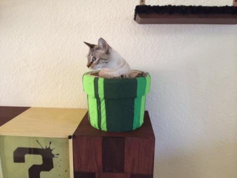mario_cat_tower01