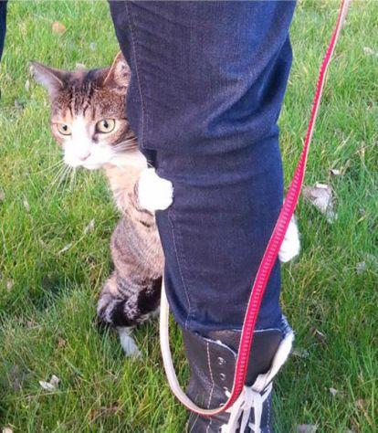 outdoor_cat02