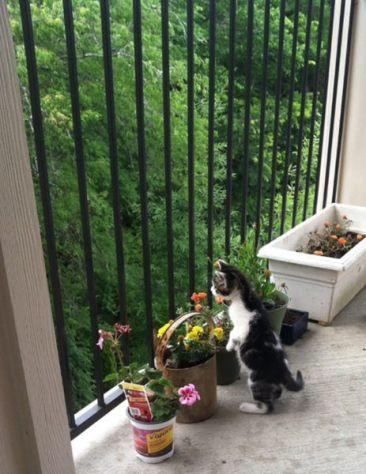 outdoor_cat04