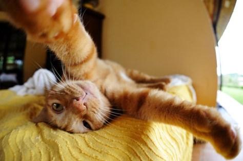 selfie_cat01