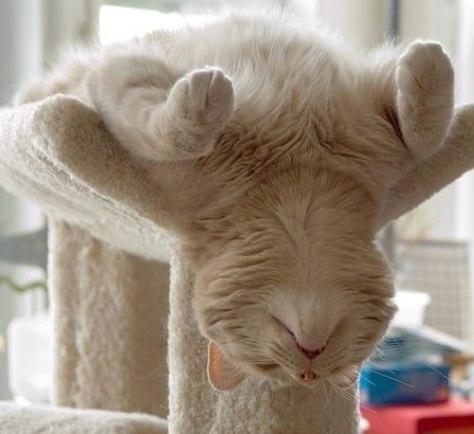sleeping_cat05