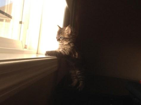 window_cat_03