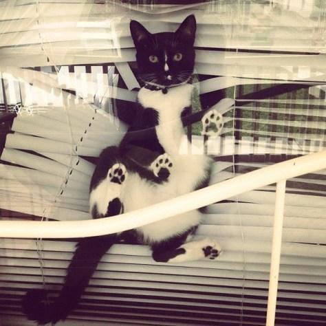 window_cat_08