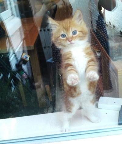 window_cat_09