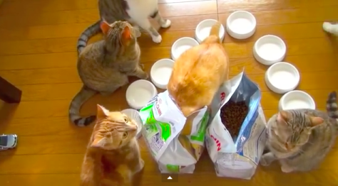 9cats_breakfast03