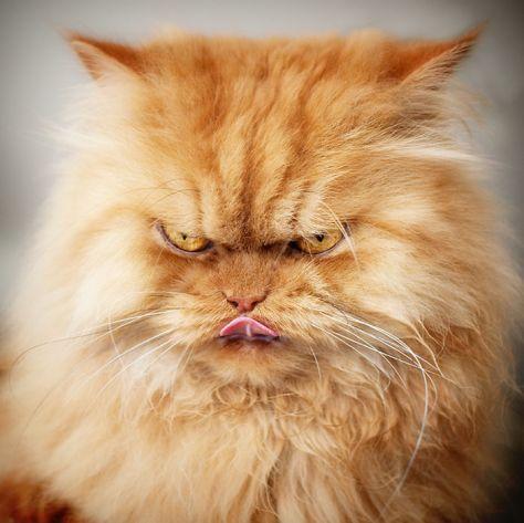 angry-cat-garfi09