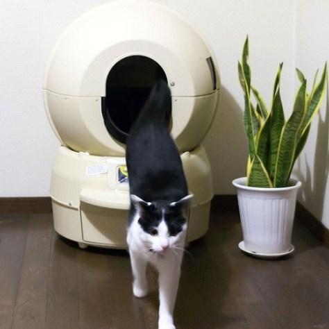 cat_robot01