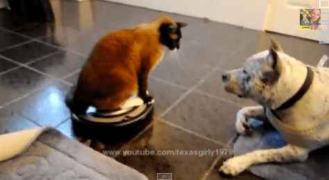 roomba_cat_and_pitbull02