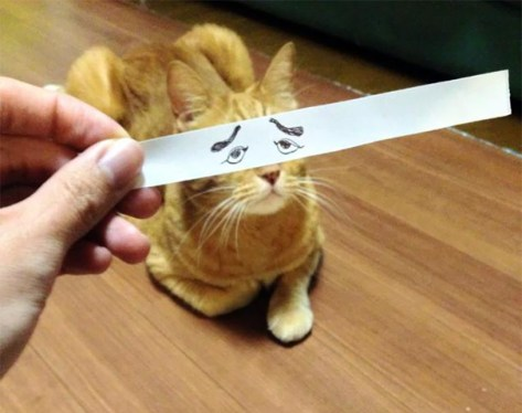 cat_anime_eye02