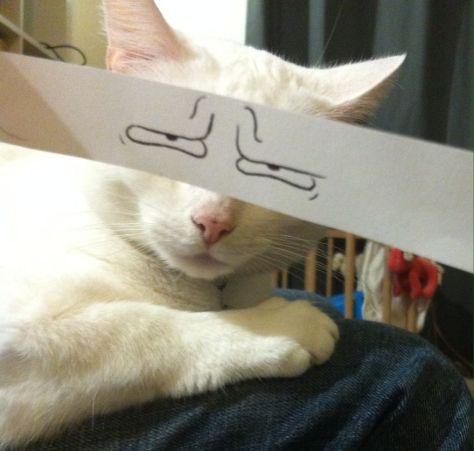 cat_anime_eye07