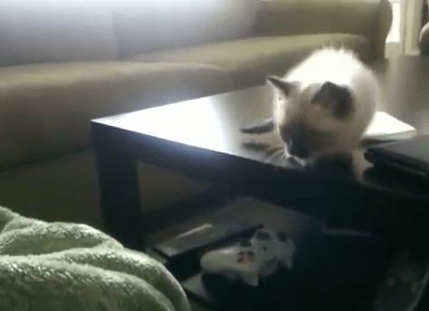 kitten_jump03