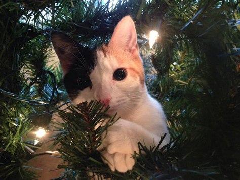 cat_christmas_tree03