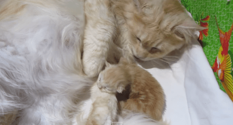mom_loves_kitten_05