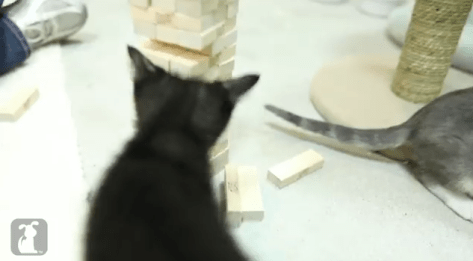 cat_plays_jenga05