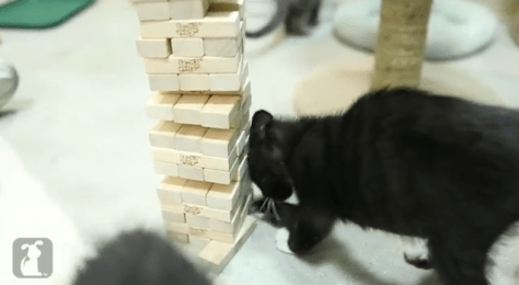 cat_plays_jenga06