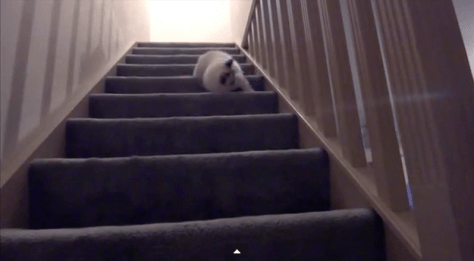 cat_tumble_down_stairs06