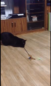 rolling_cat01