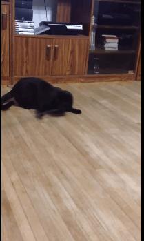rolling_cat02