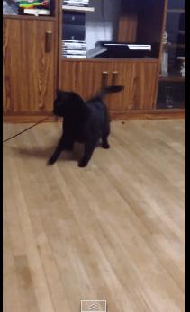 rolling_cat07