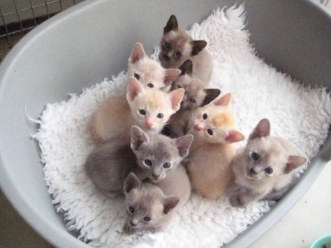 【猫画像】子猫ガン見