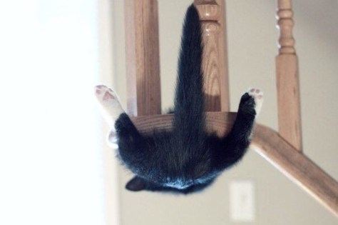 【猫画像】山