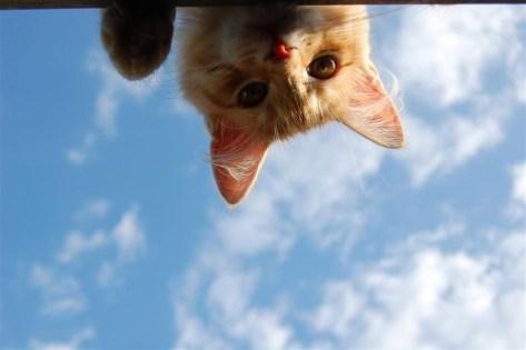 【猫画像】おはよー