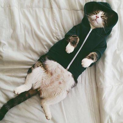 【猫画像】パーカー猫