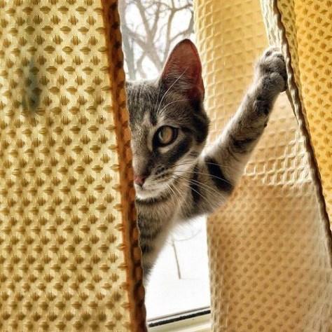 【猫画像】え、呼んだ?