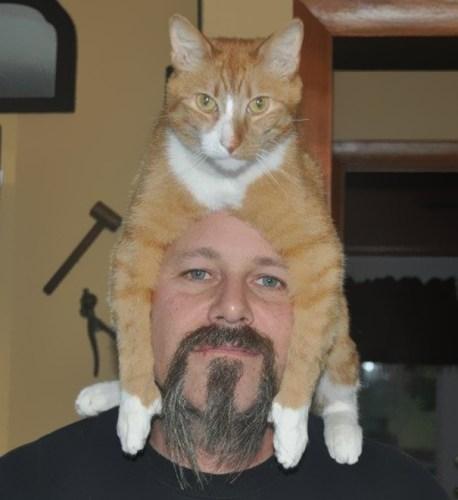 cat_hats12