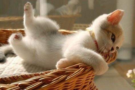 【猫画像】ジロッ