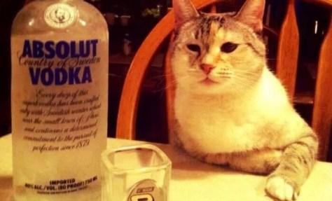 【猫画像】今夜は飲みたい気分