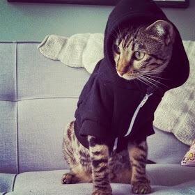 【猫画像】パーカー猫2