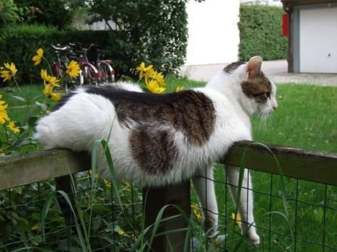 【猫画像】おなか!