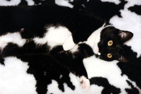 ninja_cat02