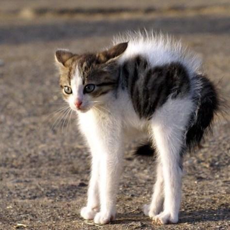【猫画像】足長