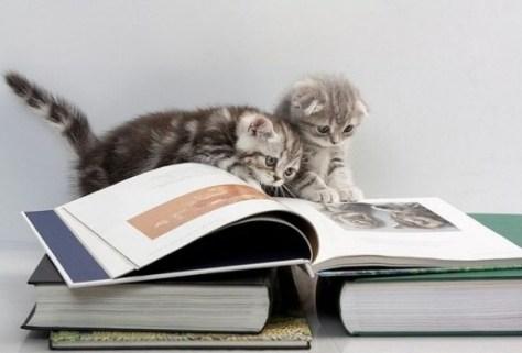 【猫画像】勉強熱心な猫