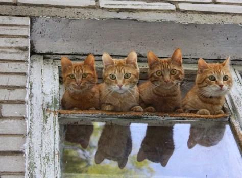 【猫画像】外が気になる面々