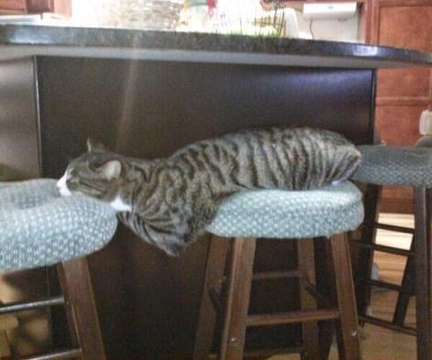 【猫画像】アゴでキープ