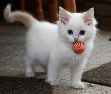 【猫画像】玉ゲット!