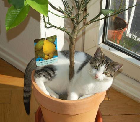 cats_in_plants10