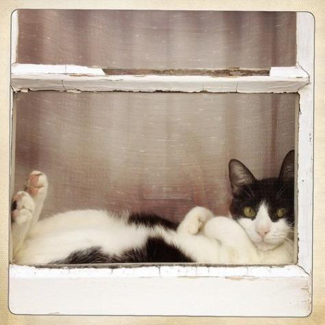 【猫画像】窓際が好き