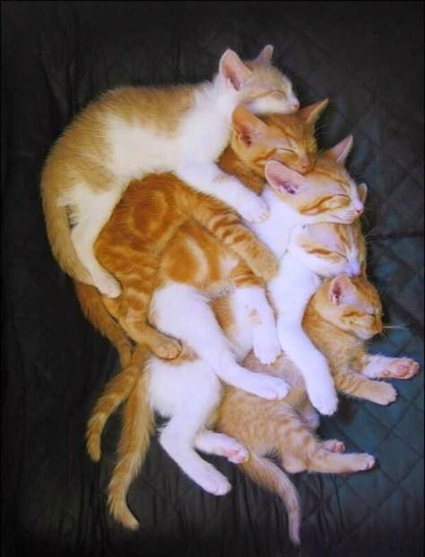 【猫画像】子猫5段重ね