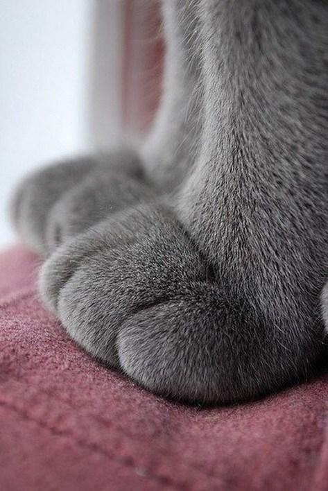 【猫画像】ふっくら感